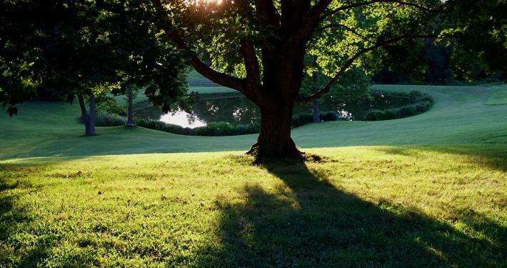 sun-setting-on-big-yard-and-pond-1391335